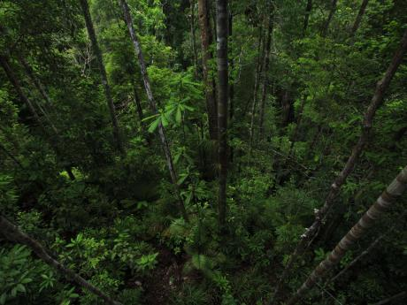 Aerial view of a forest canopy.