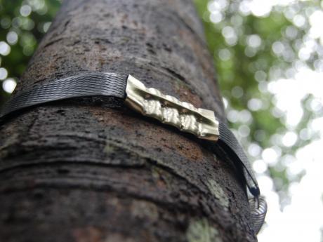 close-up tree in Bukit Timah