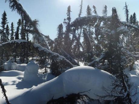 Scotty Creek forest