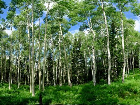 utah forest dynamics plot