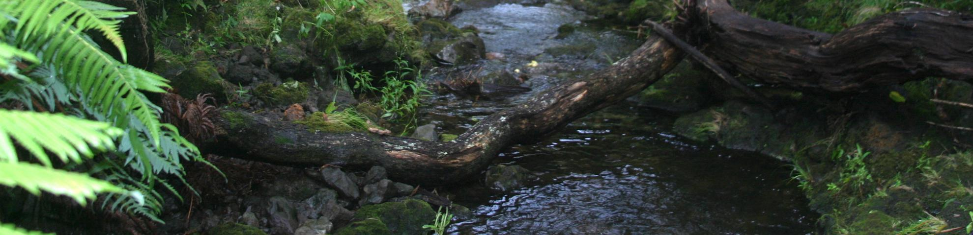 HKK forest Zeigler