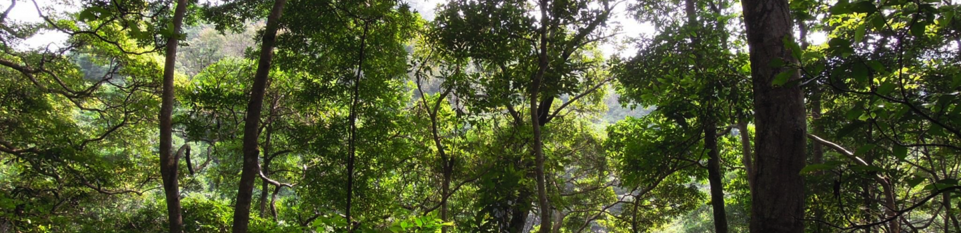 hong kong forest in China